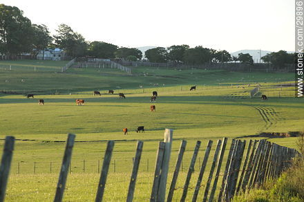 Fence in a field of Rocha. - Photos of views of State of Rocha - Department of Rocha - URUGUAY. Image #29896