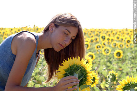 Sunflowers - Photos of flowers - Flora - MORE IMAGES. Image #30961