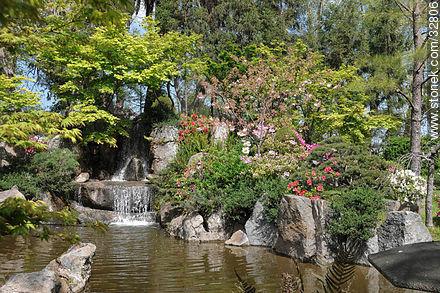 Azaleas in Montevideo Japanese Garden. - Photos of Japanese Garden at Prado quarter - Department and city of Montevideo - URUGUAY. Image #32806