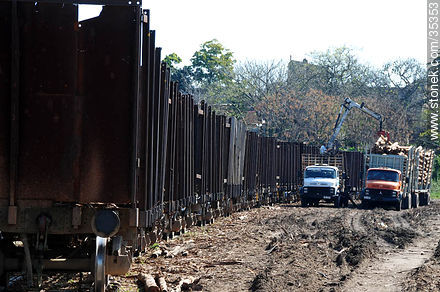Moving trunks from freight wagon to trucks for the cellulose plant - Photos of Fray Bentos - Rio Negro - URUGUAY. Image #35353