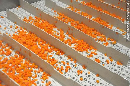 Calagua's plant, carrot industrial process. - Photos of Bella Unión - Artigas - URUGUAY. Image #36342