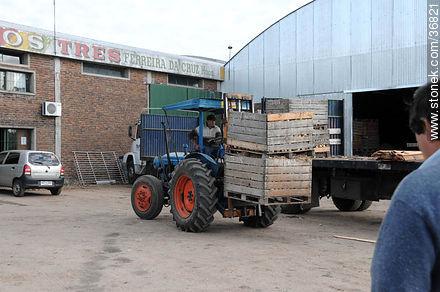 Photos of Salto department farming - Department of Salto - URUGUAY. Image #36821