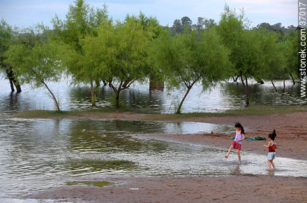 Rised Uruguay river. - Photos of Paysandú City - Department of Paysandú - URUGUAY. Image #37017