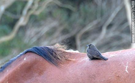 Bird over a horse. - Photos of La Coronilla resort - Department of Rocha - URUGUAY. Image #37469