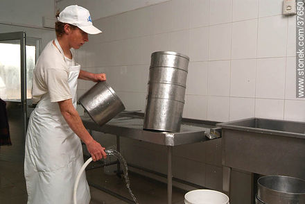 Hygiene in an artisan cheese factory - Photos of cheese industry - Department of Colonia - URUGUAY. Image #37650