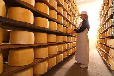 Etapas de maduracion del queso