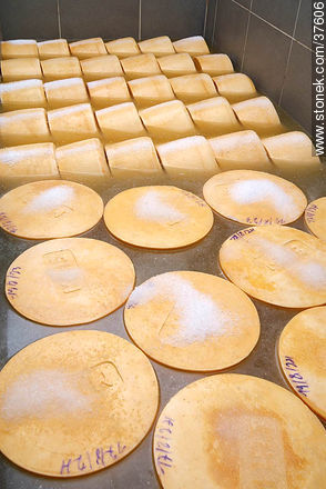 Cheese salt process - Photos of cheese industry - Department of Colonia - URUGUAY. Image #37606