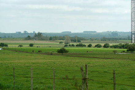 Colonia countryside - Photos of rural area of Colonia - Department of Colonia - URUGUAY. Image #37601