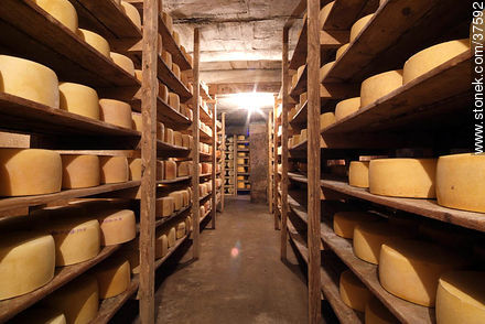 Maturing cheeses - Photos of cheese industry - Department of Colonia - URUGUAY. Image #37592