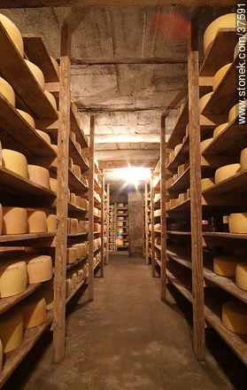 Maturing cheeses - Photos of Nueva Helvecia - Department of Colonia - URUGUAY. Image #37591