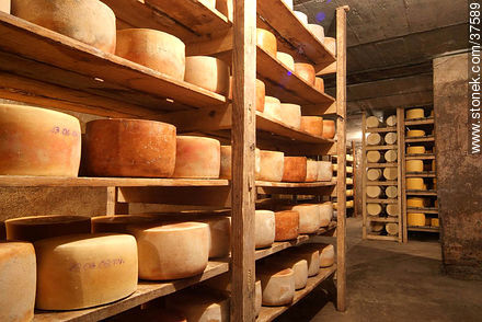 Maturing cheeses - Photos of cheese industry - Department of Colonia - URUGUAY. Image #37589
