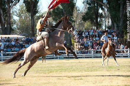 Taming a horse - Photos of Patria Gaucha festivity - Tacuarembo - URUGUAY. Image #39887