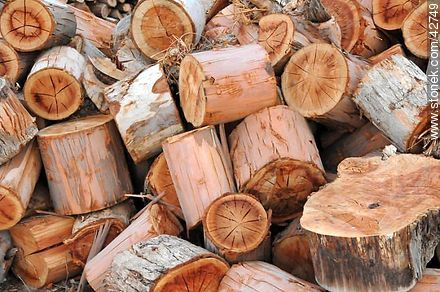 Wood logs. - Photos of Piriapolis - Department of Maldonado - URUGUAY. Image #42749