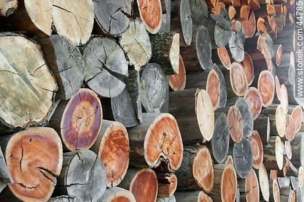 Wood logs - Photos of San Pedro de Timote - Department of Florida - URUGUAY. Image #44785