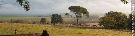 Uruguayan countryside - Photos of San Pedro de Timote - Touristic Ranch, URUGUAY. Image #44882