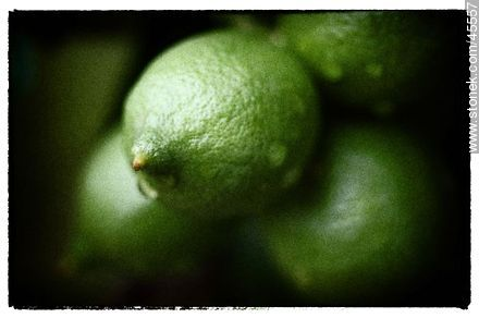 Green lemons - Photos of fruits - Flora - MORE IMAGES. Image #45557