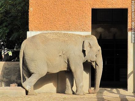 Elephant - Photos of the Zoo of Villa Dolores - Department and city of Montevideo - URUGUAY. Image #46634