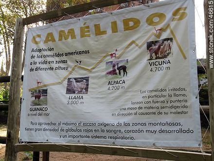 Camelid - Photos of the Zoo of Villa Dolores - Department and city of Montevideo - URUGUAY. Image #46615