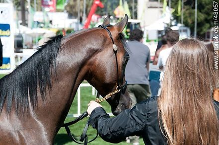 Competition for Young Horses - Photos of a Ranching Exhibition - Department and city of Montevideo - URUGUAY. Image #48057