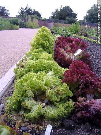 Botanical Garden of Dublin - Photos of Dublin - Ireland - BRITISH ISLANDS. Image #48697