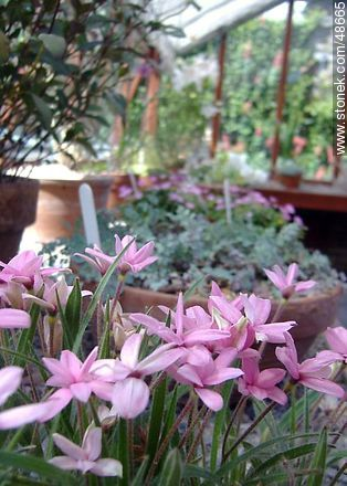 Botanical Garden of Dublin - Photos of Dublin - Ireland - BRITISH ISLANDS. Image #48665