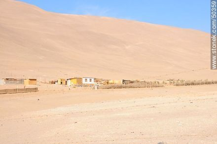 Alto de Ramírez in Valle de Azapa.  - Photos of Arica - Chile - Others in SOUTH AMERICA. Image #50359