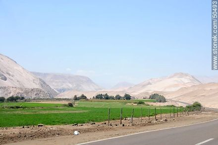 Lluta Valley crops. - Photos of Arica - Chile - Others in SOUTH AMERICA. Image #50493
