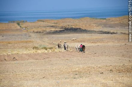 Rural work on Lake Titicaca - Photos on Lake Titicaca in Bolivia - Bolivia - Others in SOUTH AMERICA. Image #52715