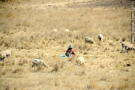 Shepherd with his flock of sheep - Photos on Lake Titicaca in Bolivia - Bolivia - Others in SOUTH AMERICA. Image #52711