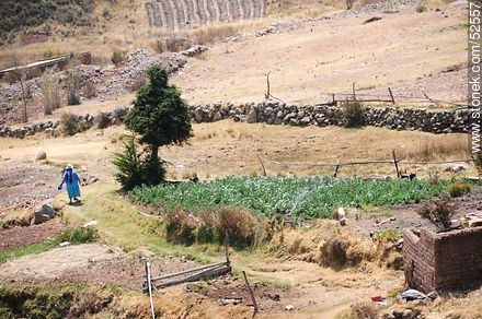 Copacabana. Crops. - Photos of the City of Copacabana - Bolivia - Others in SOUTH AMERICA. Image #52557