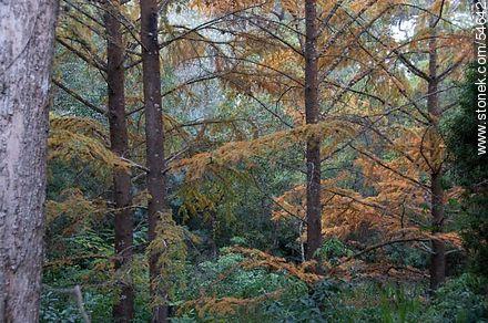 Autumn in the arboretum - Photos of Solanas and Casapueblo at Punta Ballena - Punta del Este and its near resorts - URUGUAY. Image #54642