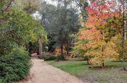Arboretum Lussich near the museums - Photos of Solanas and Casapueblo at Punta Ballena - Punta del Este and its near resorts - URUGUAY. Image #54646