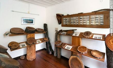 Trunck sections in the Arboretum Lussich museum - Photos of Solanas and Casapueblo at Punta Ballena, URUGUAY. Image #54707