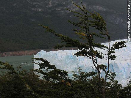 Perito Moreno glacier - Photos of the glacier Perito Moreno - ARGENTINA. Image #56422