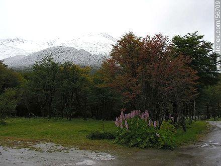 Fuegian Andes - Photos of Tierra del Fuego - ARGENTINA. Image #56709