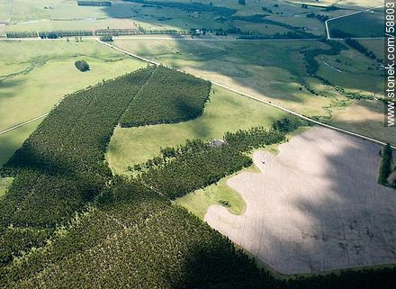 Aerial view of young eucalypt forests - Photos of views of State of Rocha - Atlantic coast., URUGUAY. Image #58803