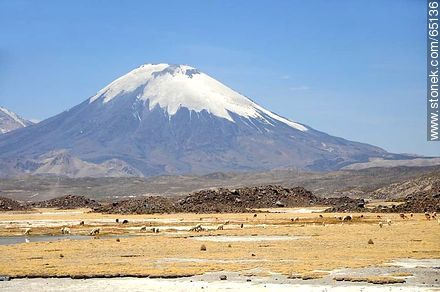 Parinacota volcano. Llamas - Photos of the Province of Parinacota - Chile - Others in SOUTH AMERICA. Image #65136