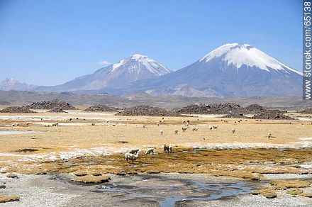 Nevados de Payachatas. Pomerape and Parinacota volcanoes. Llamas. - Photos of the Province of Parinacota - Chile - Others in SOUTH AMERICA. Image #65138