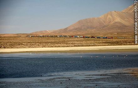 Flamingos on Lake Chungará. Row of Bolivian trucks to enter the Chilean customs - Photos of the Province of Parinacota - Chile - Others in SOUTH AMERICA. Image #65172