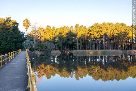 Reflection of the tree landscape at Lake OSE - Photos of the city of Minas - Lavalleja - URUGUAY. Image #67527