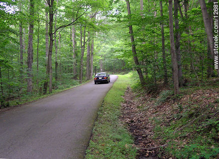 Road in the wood. Voorhees Park. - Photos of the Hunterdon County - State ofNew Jersey - USA-CANADA. Image #12681