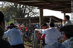 Photo #34931 - Ranching auction.