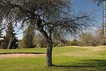 Foto #35381 - Fray Bentos Golf Club