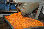 Photo #36347 - Calagua's plant, carrot industrial process.