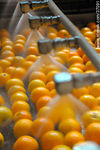 Photo #37091 - Citrus industry