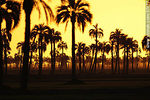 Foto #37477 - Sunset palm grove