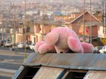 Photo #49902 - Pink Bear abandoned