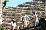 Photo #52437 - Transport of containers of water by donkey in the Isla del Sol Island, Lake Titicaca, Bolivia.