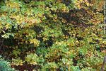 Foto #54662 - Mixed green and yellow leaves