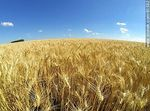 Foto #61592 - Aerial Photo of a wheatfield to harvest soon